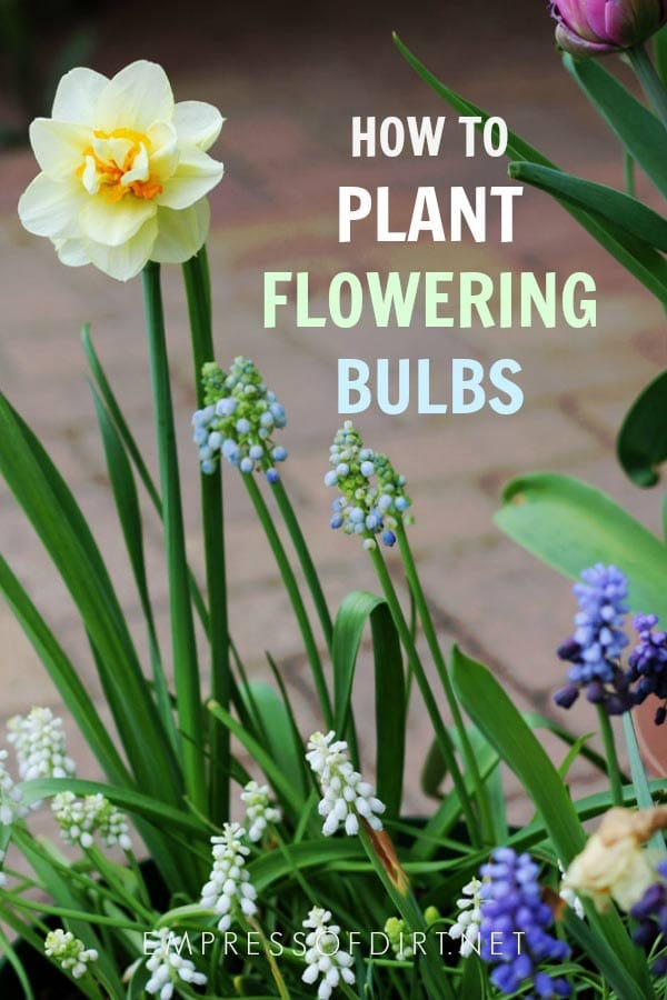 Flower Bulb Planting Tips for Beginners