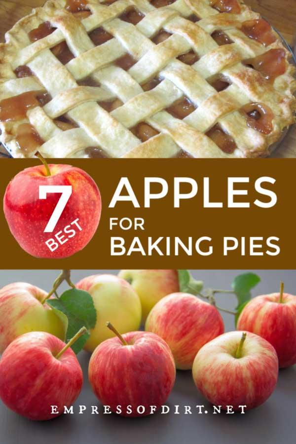 Fresh baked apple pie using the best apples for pie baking.