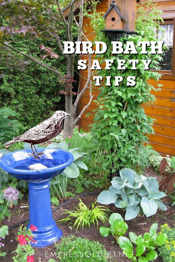 Bird Bath Safety Tips for Happy Healthy Birds