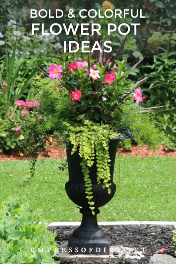 8 Bold and Colorful Flower Pot Ideas (+ Care Tips)