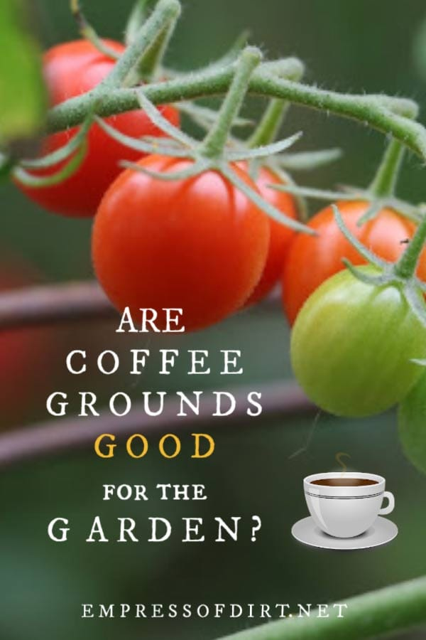 Are coffee grounds really good for the garden? Or is this another garden myth?