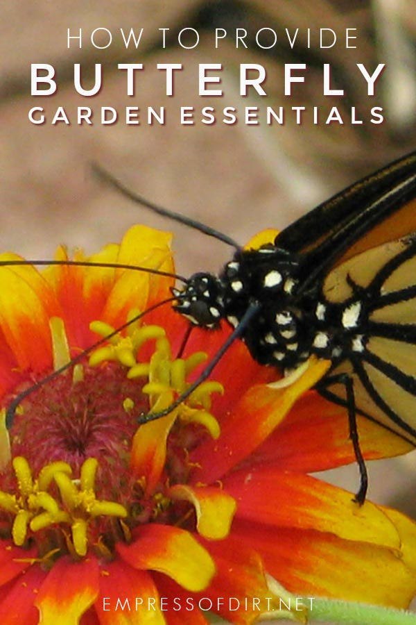 How to create a garden that provides essential habitat and food for butterflies.