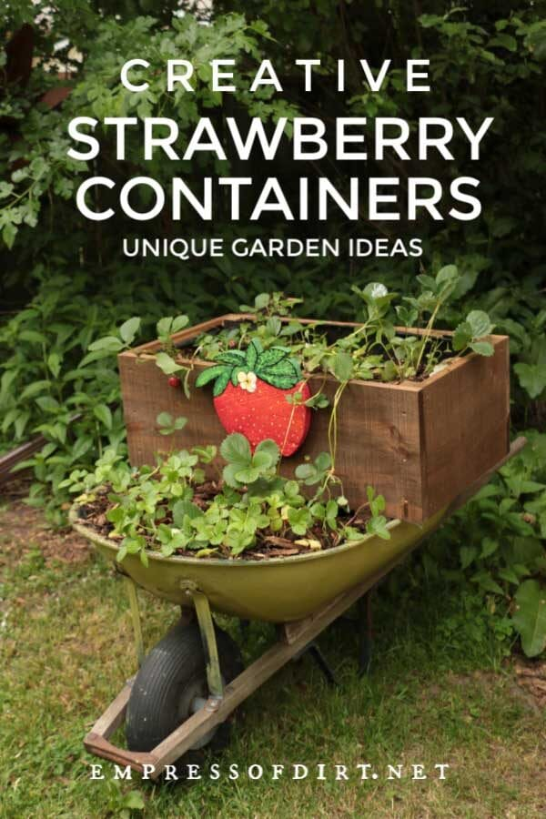 6 Creative Containers for Growing Strawberries