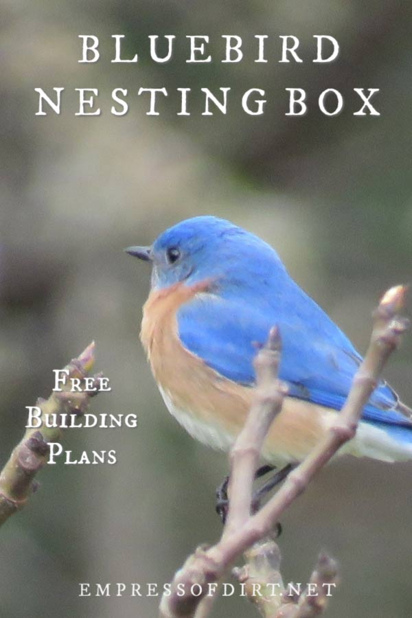 How to Build a Nesting Box for Bluebirds | Free Plans