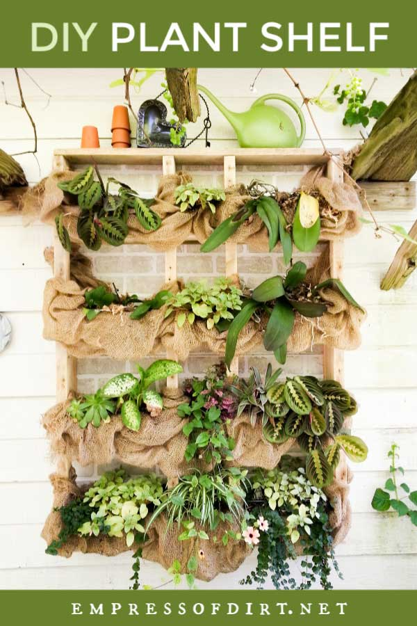 Outdoor plant shelf with houseplants and burlap fabric.