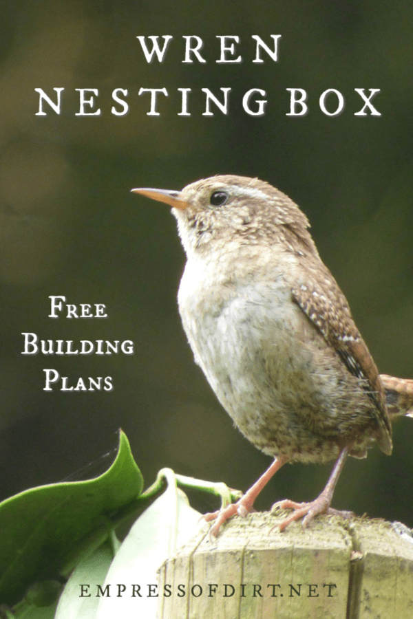 How to build a nesting box for wrens to raise their young in your garden.