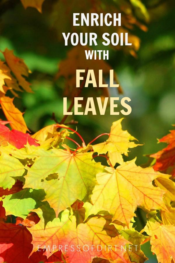 Why You Should Keep Your Fall Tree Leaves