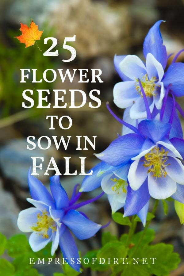 25 Annual & Perennial Flower Seeds to Sow in Fall (Printable List)