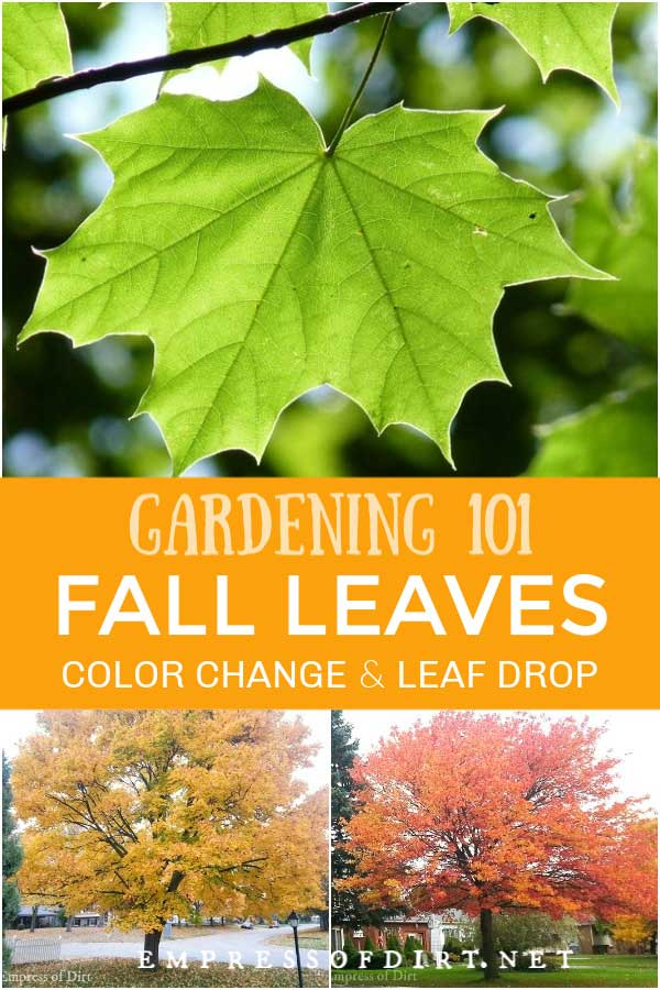 Why Tree Leaves Change Color in Fall