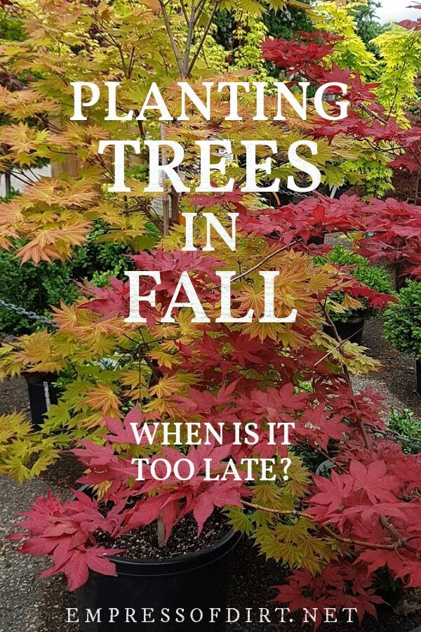 Potted trees with red, orange, and green foliage in fall.