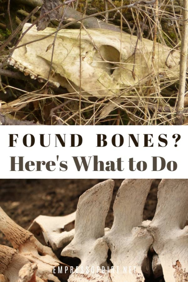 What to do if you find bones while digging in your garden.
