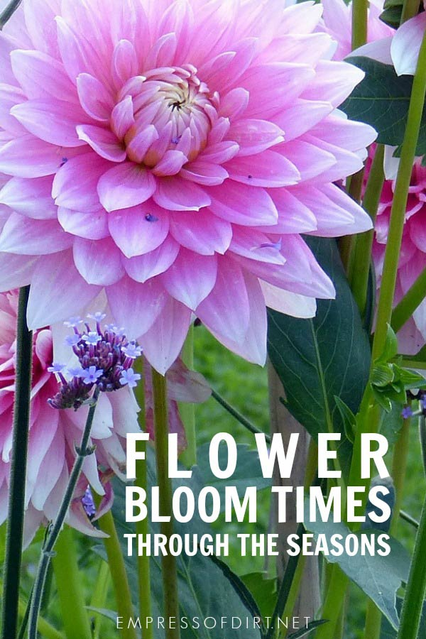 Flower bloom times through the seasons for planning your garden.