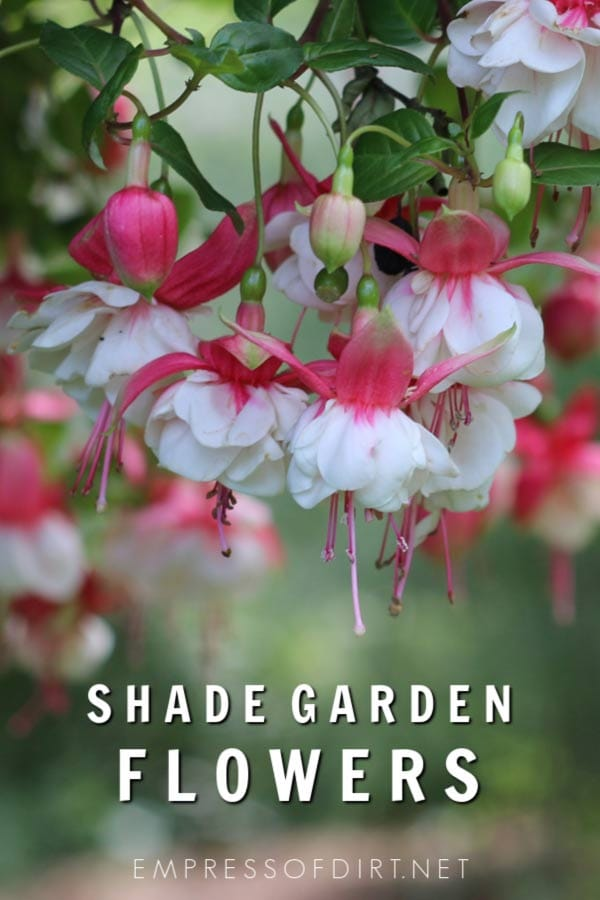 These plants provide beautiful flowers in shade gardens for a burst of color.