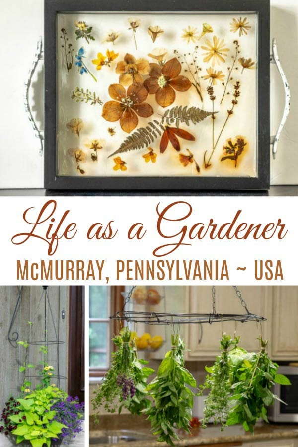 Life as a gardener in McMurray, Pennsylvania, USA.