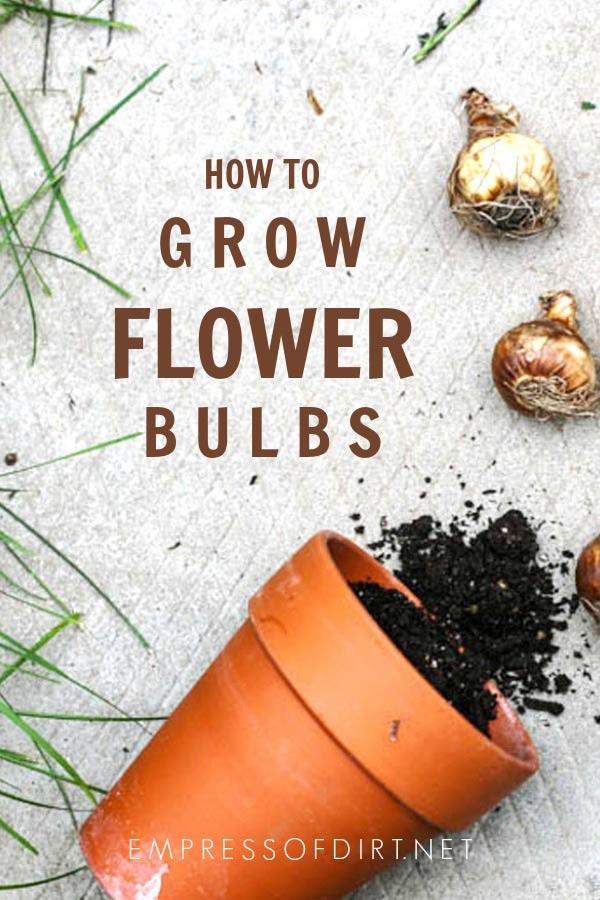 How to Grow Flower Bulbs for Beginner Gardeners