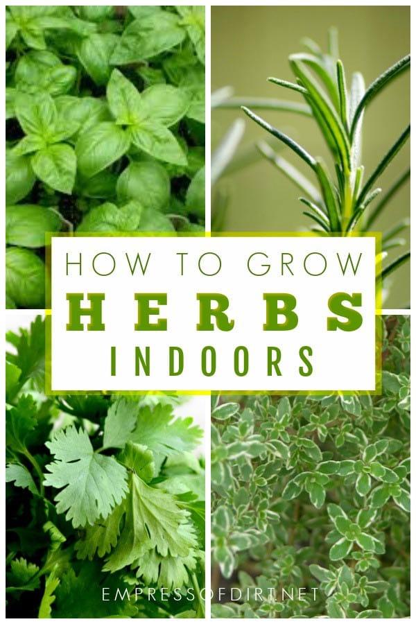 How To Grow Herbs Indoors Empress Of Dirt