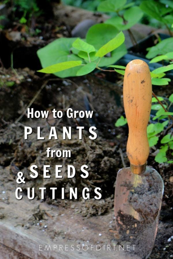 How to Grow Plants from Seeds & Cuttings