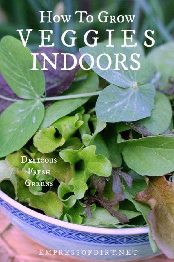 How to grow vegetables indoors in your home all year-round.