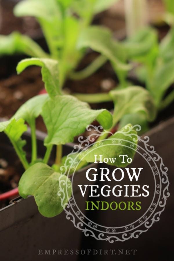 Tips for growing vegetables indoors in your home all year-round.