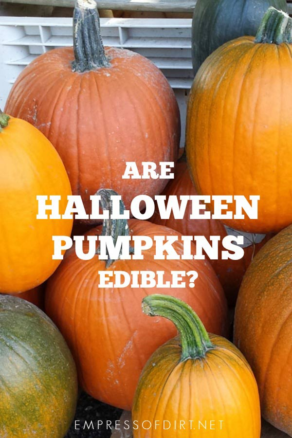 Are Halloween pumpkins edible? And what can I do with it after October 31?