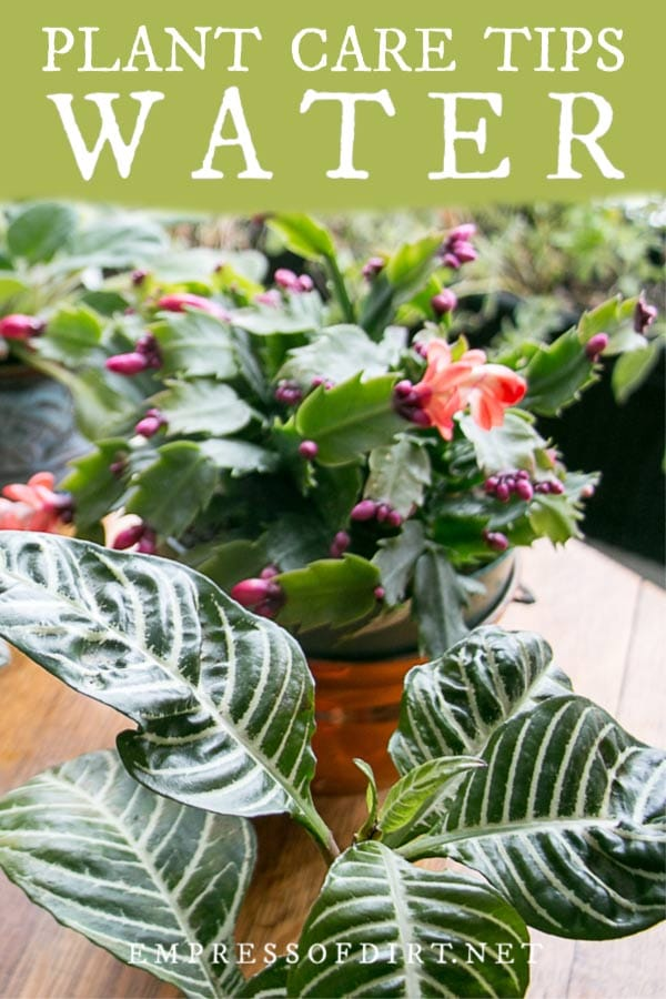How often should I water my houseplants? Find out here.