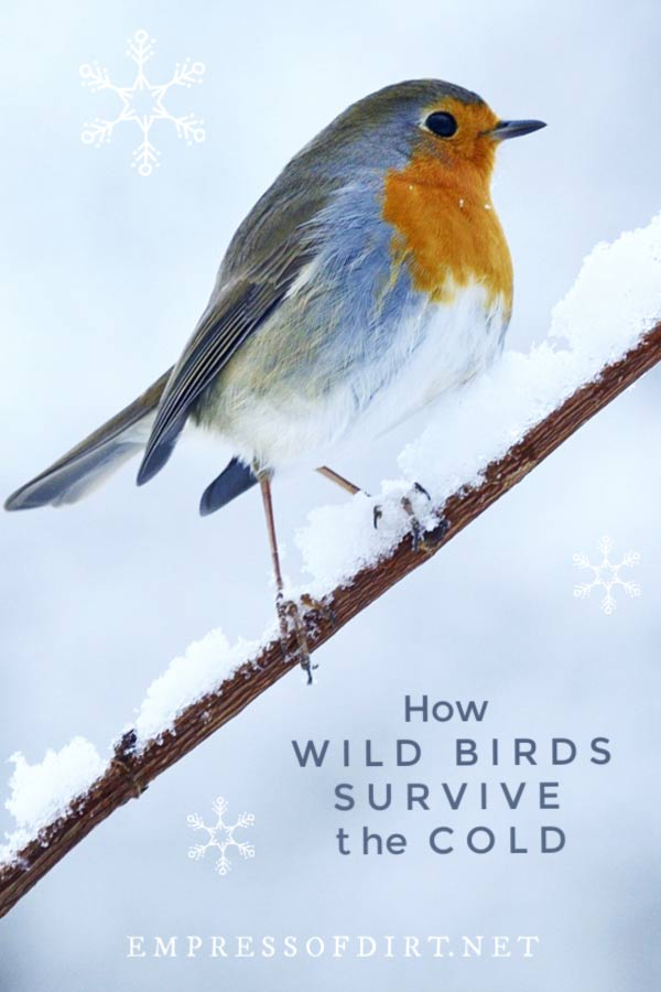 How Wild Birds Survive the Cold