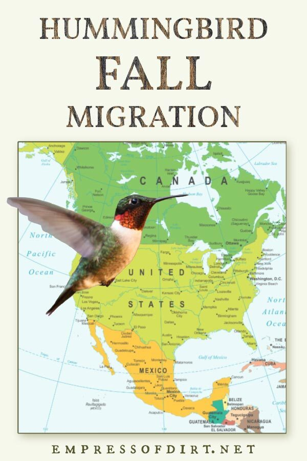 Hummingbird and map of North America.