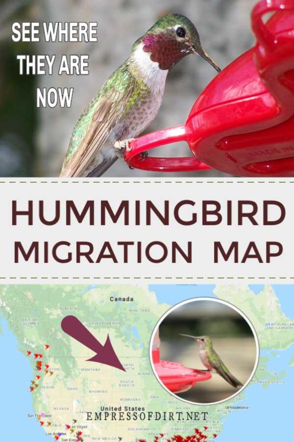 Hummingbird migration map.