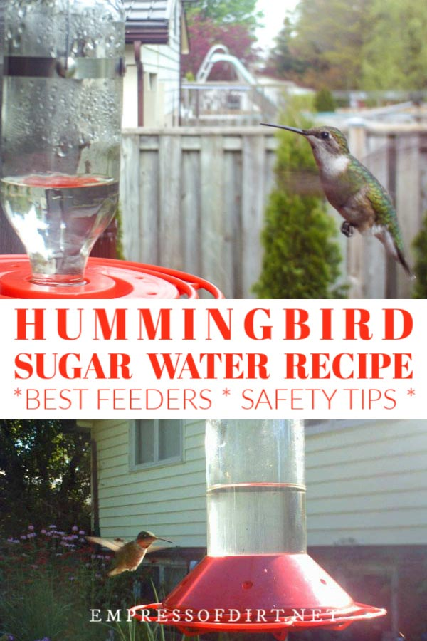 How to make hummingbird food and choose the best hummer feeder