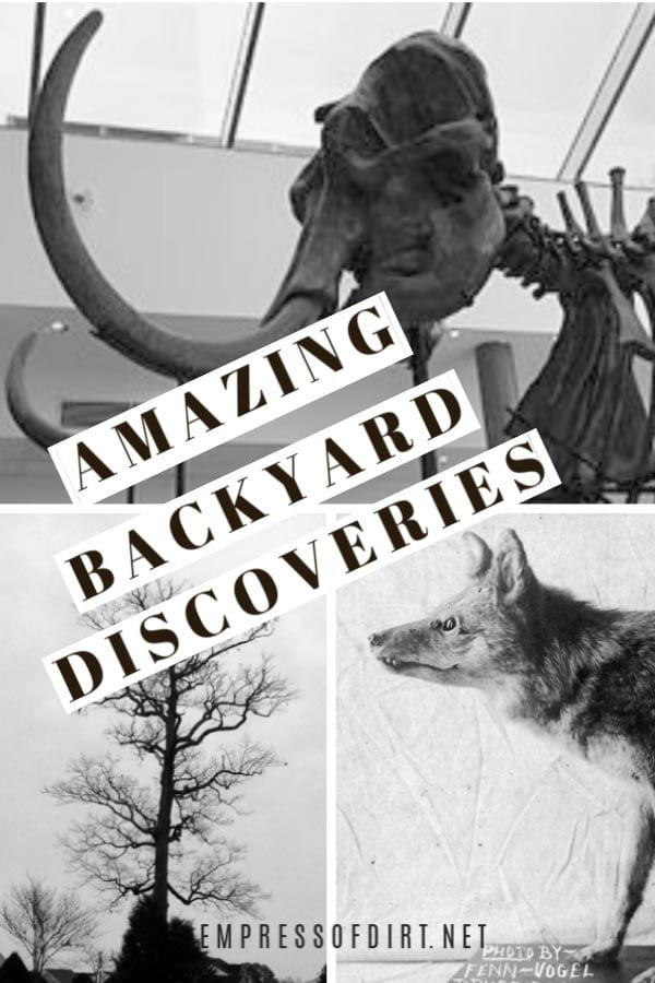 7 Incredible Discoveries in Backyard Gardens