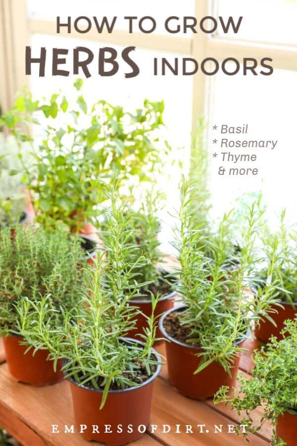 How to Grow Herbs Indoors (Beginner's Guide)