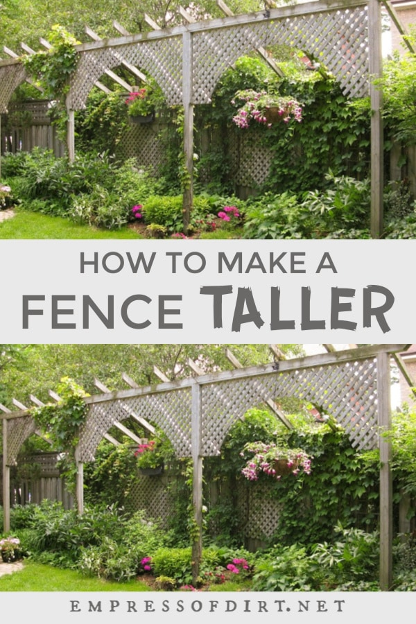 Tall trellis used to make a fence taller.