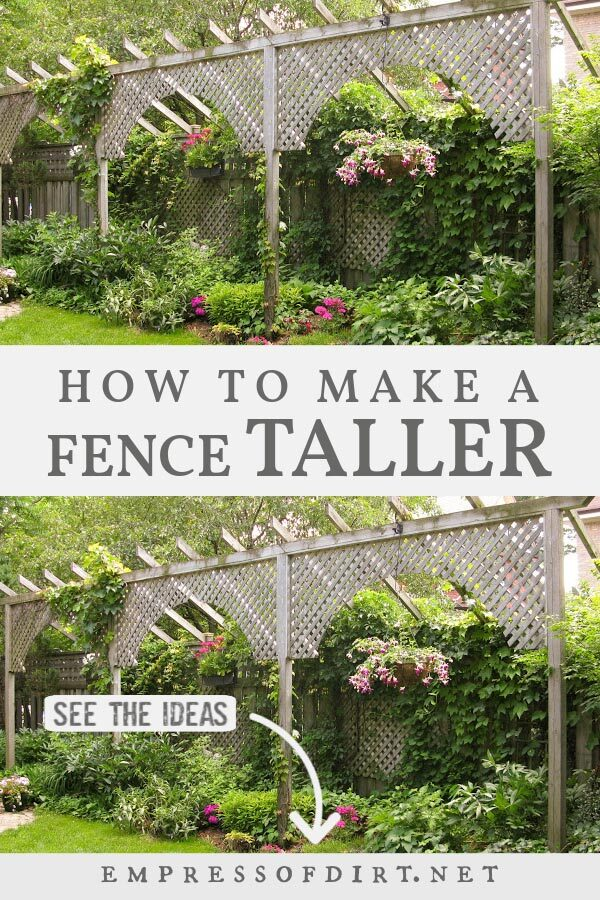 A trellis idea showing how to make a fence seem taller.