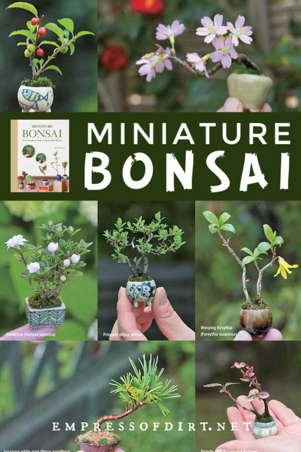 Examples of mini bonsai plants.