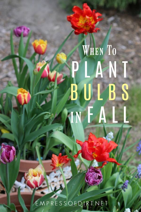 How Nature Tells Us It's Fall Bulb Planting Time