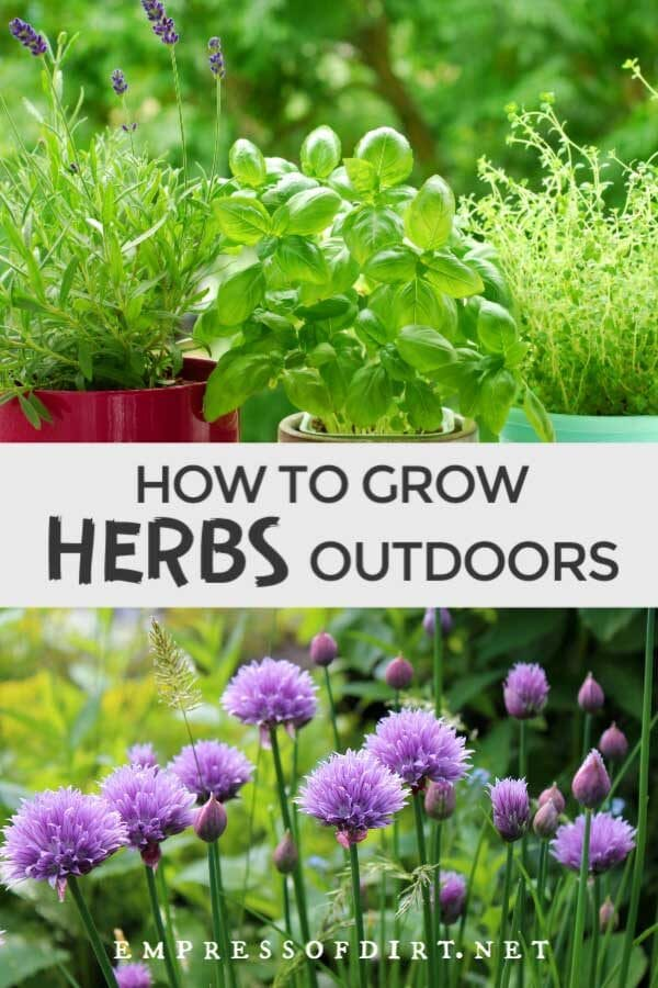How to Grow Herbs Outdoors (Beginner's Guide)