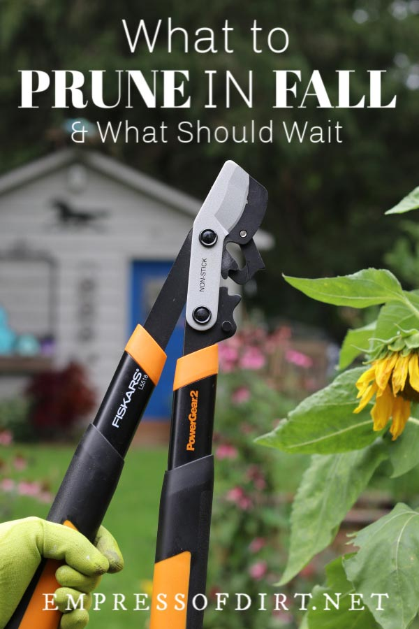 What to Prune in Fall and What Should Wait