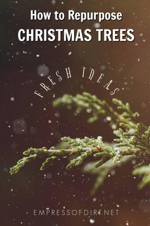 25 Creative Ways to Reuse Christmas Trees