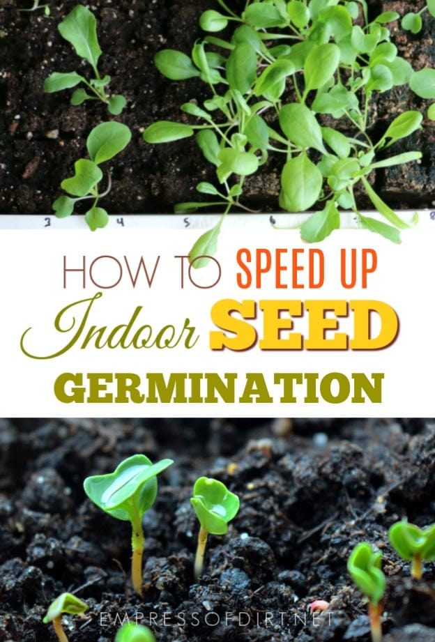 Tips for Speeding Up Seed Germination