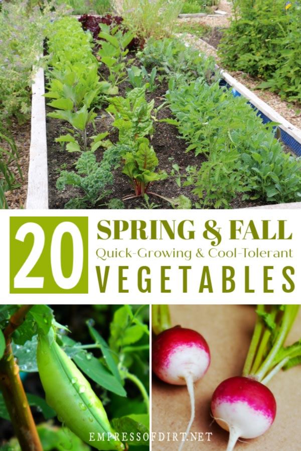 Vegetables to grow in cool weather during spring and fall.