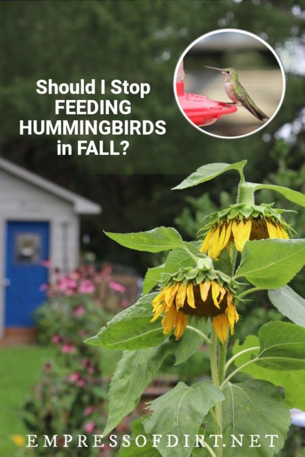 Should I Remove my Hummingbird Feeders in Fall?