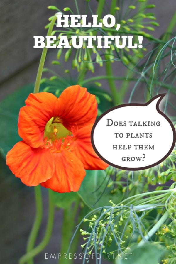 Does talking to plants really make them grow better?