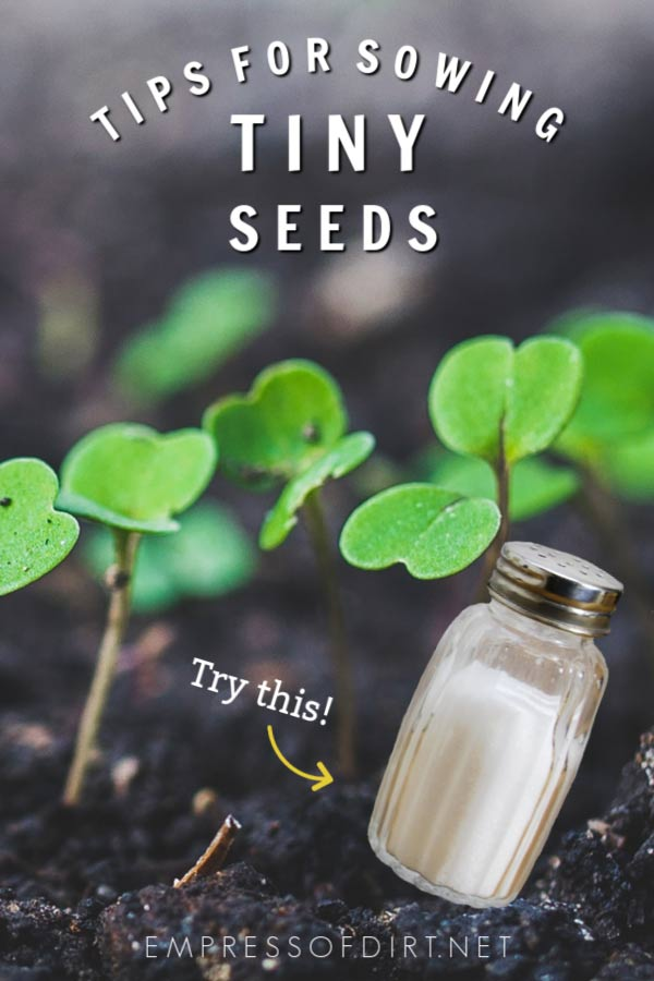 Tiny seeds may never germinate because they float or fly away. These tips will help.