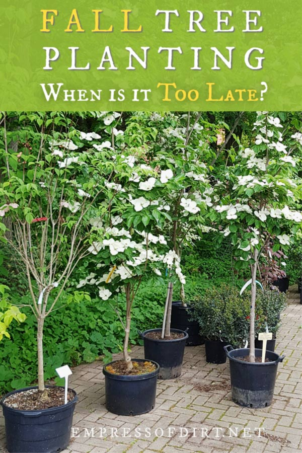 When is it too Late to Plant Trees in Fall?