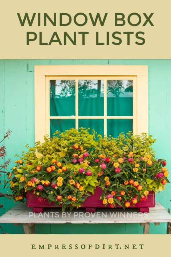 3 Plant Lists for Gorgeous Window Box Combinations
