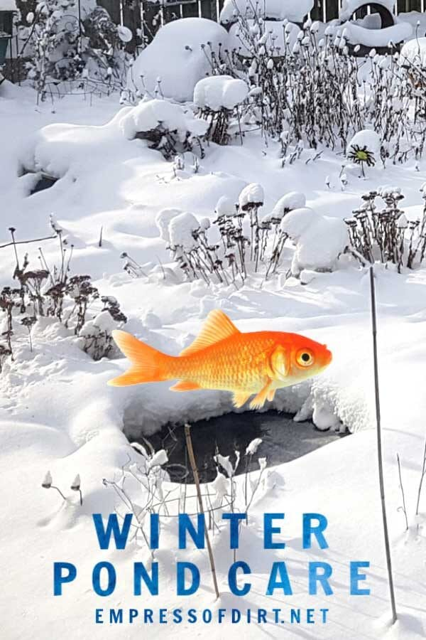 How to Care for Your Pond—and Fish—in the Winter