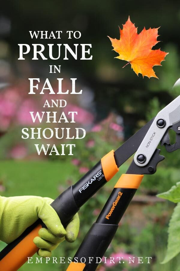 Hand holding garden loppers for fall pruning .