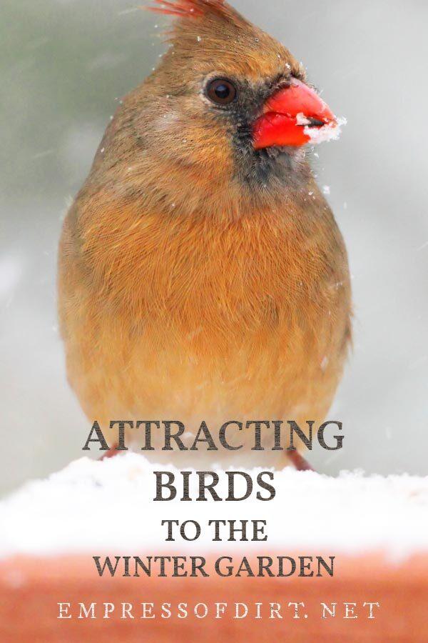 Female cardinal bird in the winter garden.
