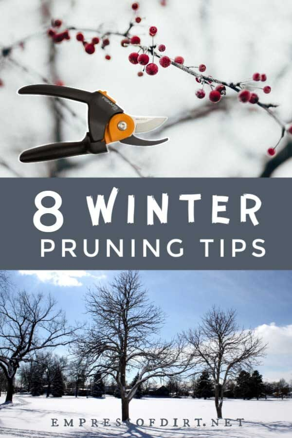 What to Prune in Winter