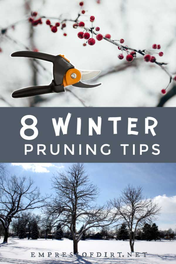 Winter trees and pruning tool.